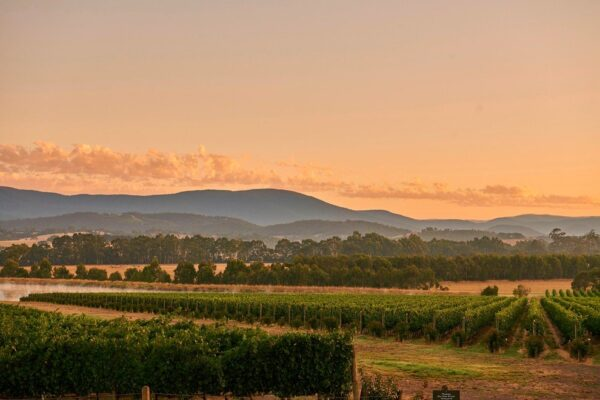 Green Point Vineyard Melbourne Private Tours