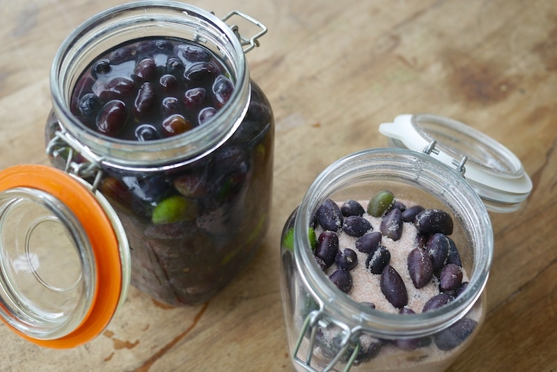 Olives Are Ready to Pick! - Here's How to Brine & Preserve Them