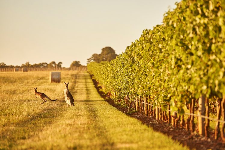 Yarra Valley Private Tour Melbourne